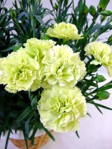 お供え 花3